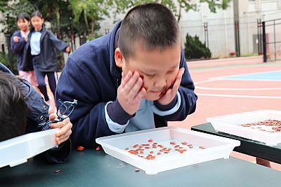 中華文化日–班際奪糖奇兵大賽